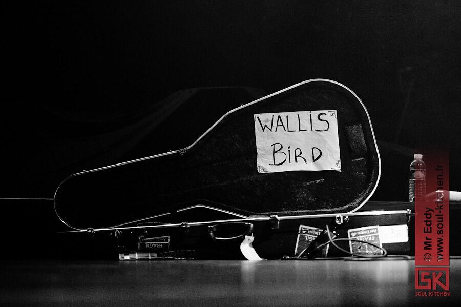 2010_11_19_wallisbird