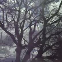 clip : Joseph Elm – Bees