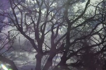 clip : Joseph Elm - Bees