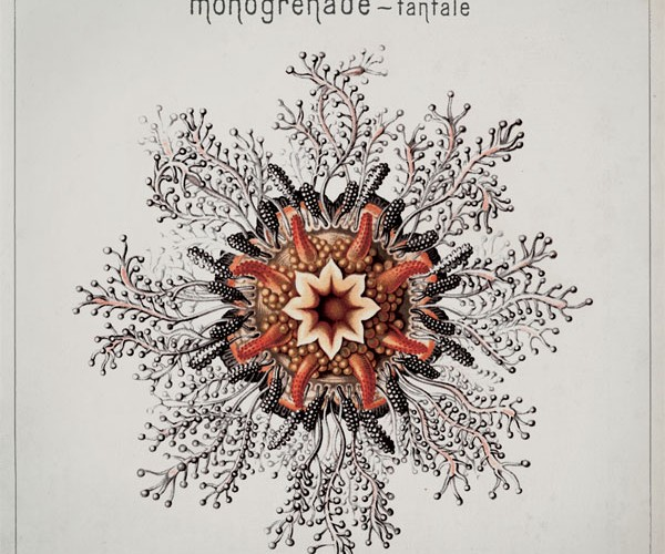 Monogrenade : Tantale