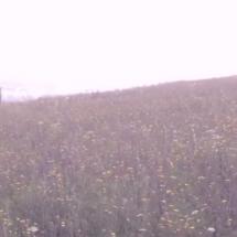 Vidéo : Buridane – Si le ciel offre une eclaircie