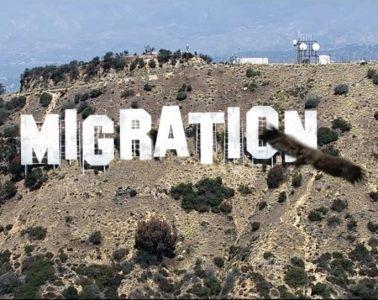 General Elektriks - Migration Feathers
