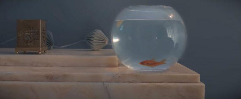 Paillette - Goldfish