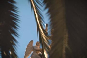 La Féline - Palmiers Sauvages