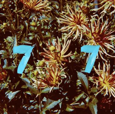B77 - Fleur
