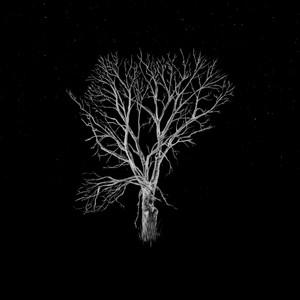 Fink - Bloom Innocent – Acoustic