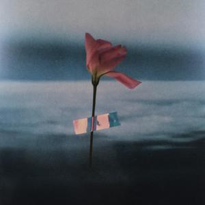 Will Samson - Flowerbed